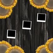 Photo frame and sunflower — Stock Photo