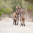 Donkeys in field outdoor in summer looking - Stock Photo