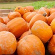Orange yellow pumpkin outdoor in autumn - Stock Photo