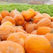Orange yellow pumpkin outdoor in autumn — Stock Photo #14300509