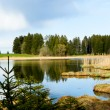 Beutiful landscape in spring lake and forest — Stock Photo