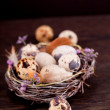 Easter decoration with quail eggs on wood — Stock Photo