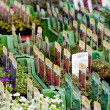 Flowers assortement crop seed garden market - Stock Photo