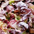 Fresh grean and red head lettuce salad macro — Stock Photo