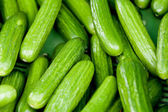Fresh green cucumber on market macro — Stock Photo