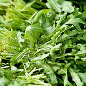 Fresh green rucola salad on market macro — Stock Photo