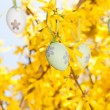 Easter egg and forsythia tree in spring outdoor — Stock Photo #25516799