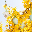 Easter egg and forsythia tree in spring outdoor — Stock Photo