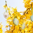Easter egg and forsythia tree in spring outdoor — Stock Photo #25516891