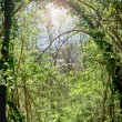 Green forest and sunlight in summer — Stock Photo
