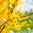 Easte egg and forsythia tree in spring outdoor — Stock Photo #25521743