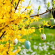 Easte egg and forsythia tree in spring outdoor — Stock Photo
