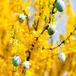 Easte egg and forsythia tree in spring outdoor — Stock Photo #25522037