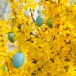 Easte egg and forsythia tree in spring outdoor — Stock Photo #25522051