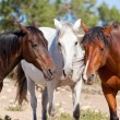 Group of horses outside horse ranch in summer — Stock Photo