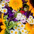 Beautiful colorful collection of flowers spring summer celebration — Stock Photo