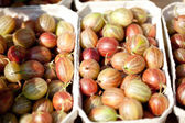 Fresh tasty gooseberries macro closeup on market outdoor — Stock Photo