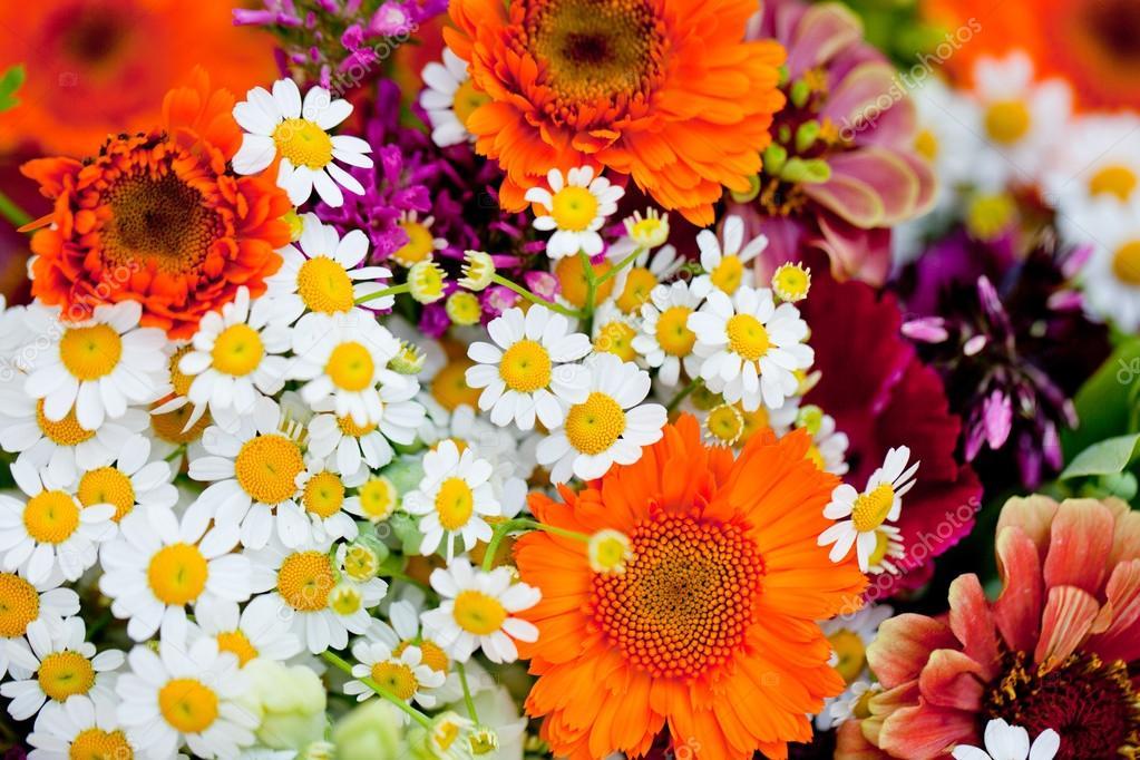 belle collection color e des fleurs printemps t photographie nilswey 28127799. Black Bedroom Furniture Sets. Home Design Ideas