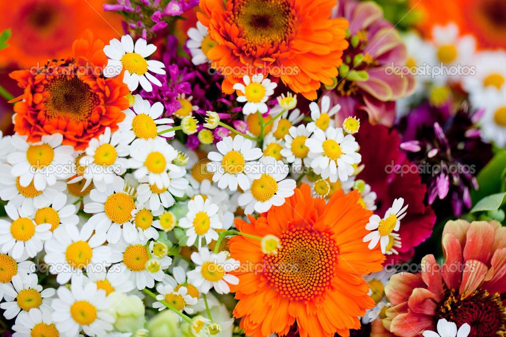 belle collection color e des fleurs printemps t photo 28127799. Black Bedroom Furniture Sets. Home Design Ideas