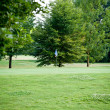 beautiful park geen grass and trees background copyspace — Stock Photo