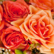 Colorful beautiful roses flowers macro closeup card background — Stock Photo