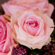 Colorful beautiful roses flowers macro closeup card background — Foto Stock