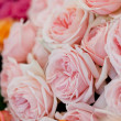 Stock Photo: Colorful beautiful roses flowers macro closeup card background