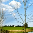 Beutiful landscape in spring lake and forest  — Stok fotoğraf