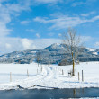 Beautiful sunny landscape in winter with blue sky — Stok fotoğraf