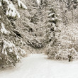 Forest and field  winter landscape — Stock Photo