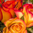 Stock Photo: Background of vivid orange roses