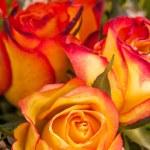 Background of vivid orange roses — Stock Photo #37935945