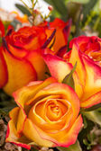 Background of vivid orange roses — Stock Photo
