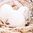 Plain undecorated Easter eggs in nest — Stock Photo #37982323