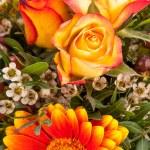 Background of vivid orange roses — Stock Photo #37984021