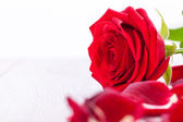 Beautiful red rose on white bachground — Stock Photo