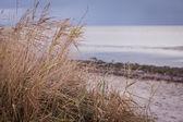 Beautiful landscape dunes baltic sea in autumn winter — Stock Photo