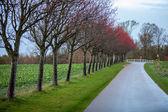 пейзаж и улицы осенью весна открытый — Стоковое фото