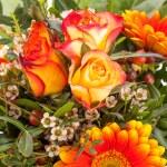 ������, ������: Orange gerbera daisy