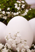 Undecorated Easter eggs — Stock Photo