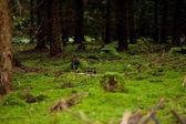 Natuur bos herfst met groene mos en bomen — Stockfoto