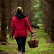 Young woman collecting mushrooms in forest — Stock Photo
