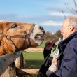 Feeding a horse in a paddock — Stock Photo #42194227
