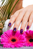 Manicured purple nails — Stock Photo
