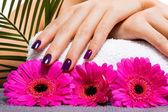 Manicured purple nails — Stock Photo