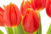 Red tulips for a loved one — Stock Photo