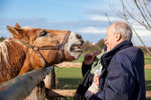 Feeding a horse in a paddock — Stock Photo