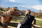Woman is feeding a horse — Stock Photo
