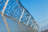 Coiled razor wire on top of a fence — Stock Photo