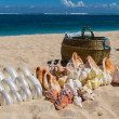 Conchs and seashells for sale on a beach — Stock Photo #47009041
